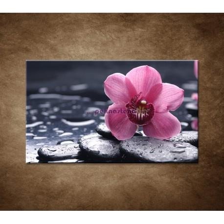 Obraz na stenu - Ružová orchidea na kameni