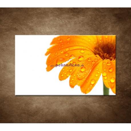 Obraz nastenu - Oranžová gerbera