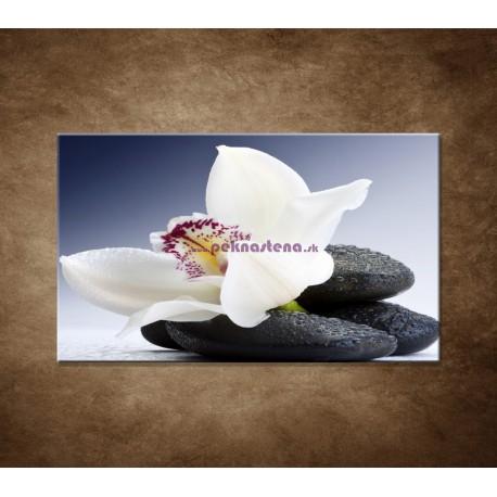 Obraz na stenu - Biela orchidea na čiernom kameni