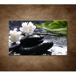 Obraz na stenu - Sakura na kameni