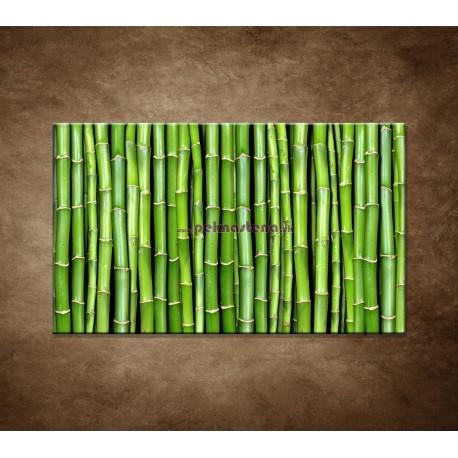 Obraz na stenu - Bambus