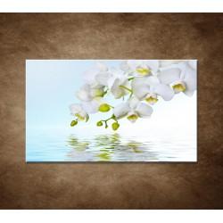 Obraz - Biela orchidea nad hladinou