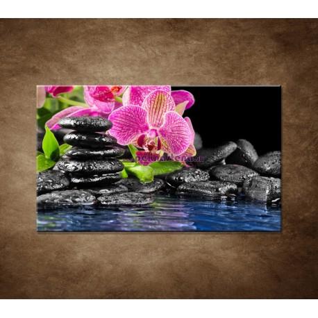 Obraz na stenu - Kamene s kvetom