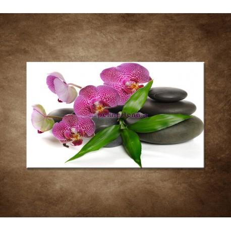Obraz na stenu - Orchidea na kameňoch