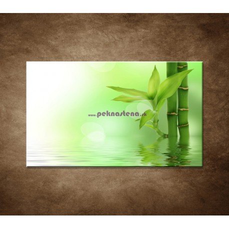 Obraz na stenu - Bambusový výhonok