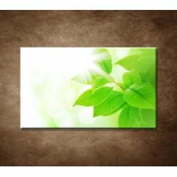 Obraz - Jarné lístky