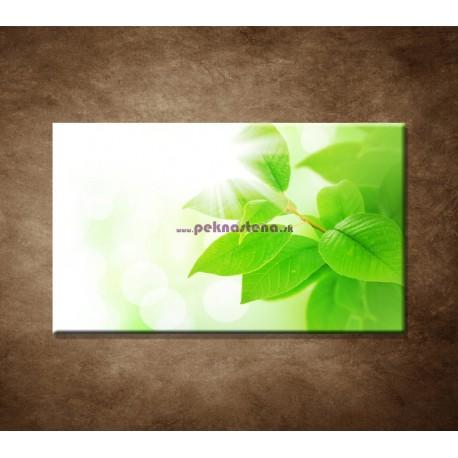 Obraz na stenu - Jarné lístky