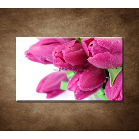 Obraz na stenu - Tulipány