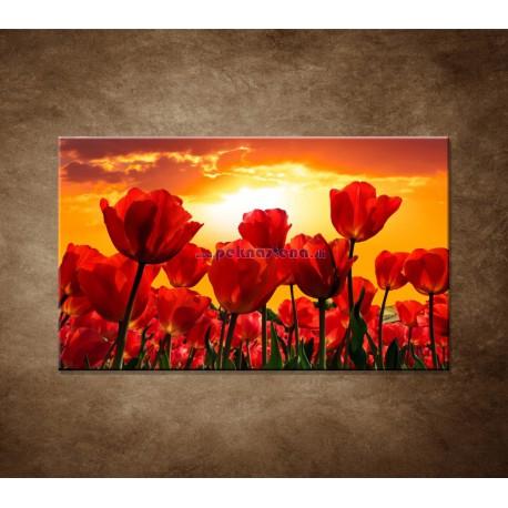 Obraz na stenu - Západ slnka nad tulipánmi