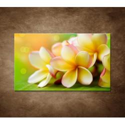Obraz na stenu - Žltá orchidea
