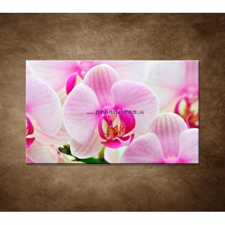 Obraz na stenu - Ružová orchidea