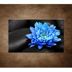 Obraz - Modrý kvet na kameňoch