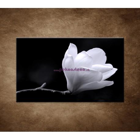 Obraz na stenu - Kvet magnólie