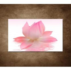 Obraz - Lotosový kvet
