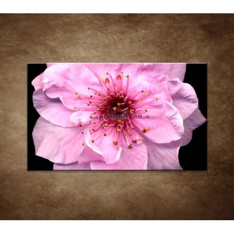 Obraz na stenu - Kvet čerešne
