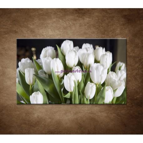 Obraz na stenu - Biele tulipány