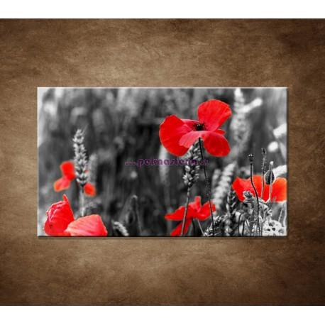 Obraz na stenu - Červené vlčie maky