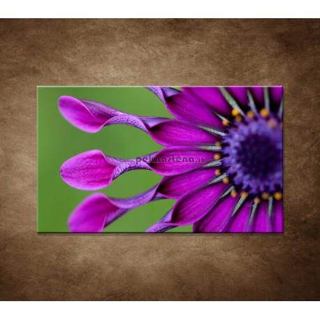 Obraz na stenu - Tropický kvet