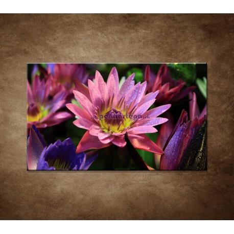 Obraz na stenu - Lotosové kvety