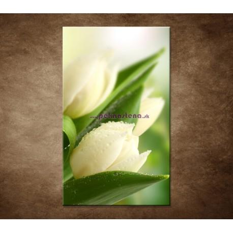 Obraz na stenu - Rosa na tulipáne