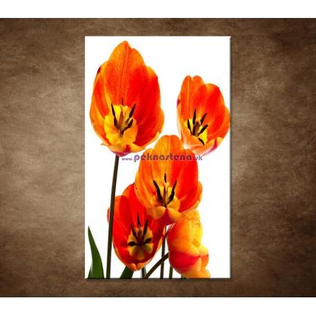 Obraz na stenu - Oranžové tulipány