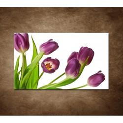 Obraz - Fialové tulipány