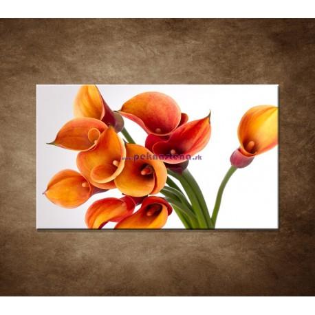 Obraz na stenu - Oranžové kaly