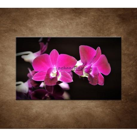 Obraz na stenu - Ružová orchidea na čiernom pozadí