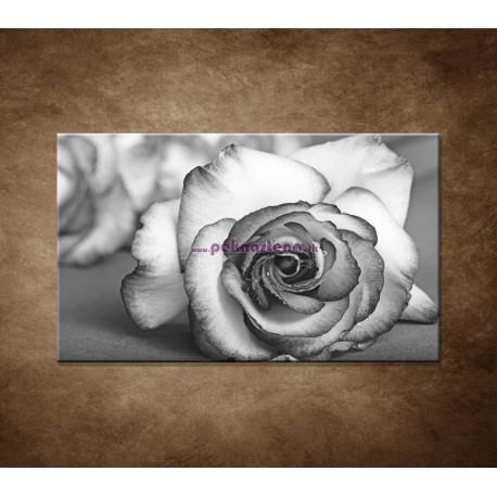 Obraz na stenu - Ruža