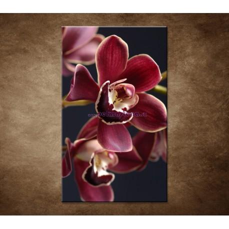 Obraz na stenu - Bordová orchidea