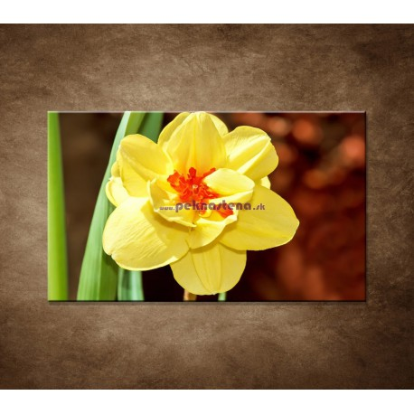 Obraz na stenu - Narcis - detail