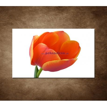 Obraz na stenu - Tulipán - detail