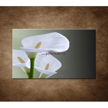 Obraz na stenu - Tri biele kaly