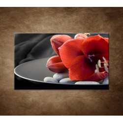 Obraz na stenu - Červená amarylka