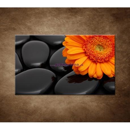 Obraz na stenu - Oranžová gerbera na kameňoch