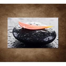 Obraz - Kvapky rosy na kameni