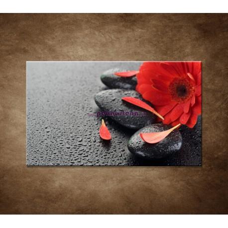 Obraz na stenu - Červená gerbera a kamene