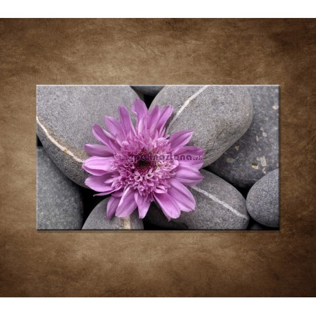 Obraz na stenu - Sivé kamene s kvetom