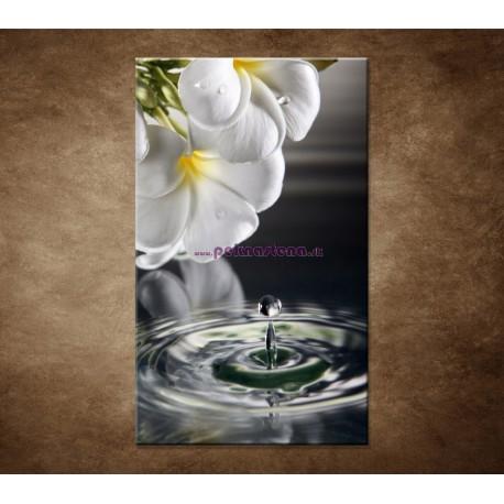Obrazy na stenu - Biely kvet nad vodou