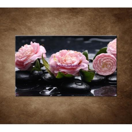 Obrazy na stenu - Kvety kamélie a kamene