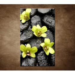 Obraz - Kamene s kvapkami a orchideou