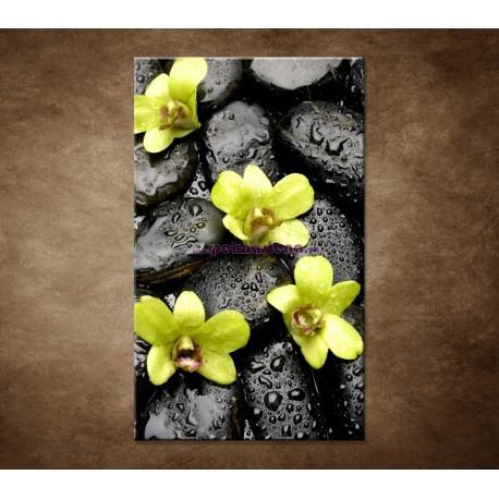 Obrazy na stenu - Kamene s kvapkami a orchideou