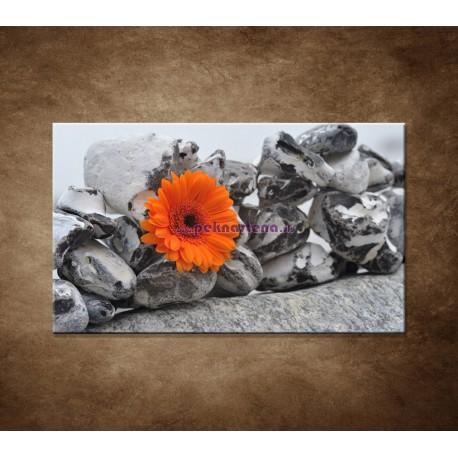 Obraz na stenu - Oranžová gerbera a kamene