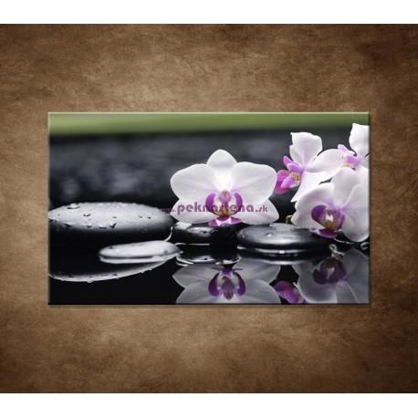 Obrazy na stenu - Ružová orchidea a kamene