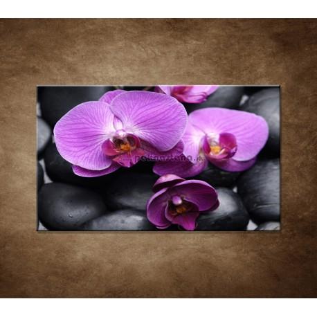 Obrazy na stenu - Ružové orchidey