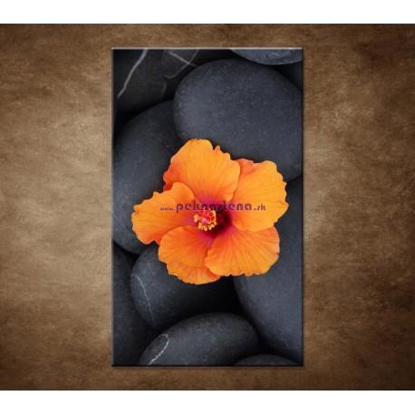 Obrazy na stenu - Oranžový ibištek na kameni
