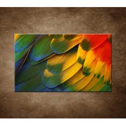 Obraz - Farebné perie