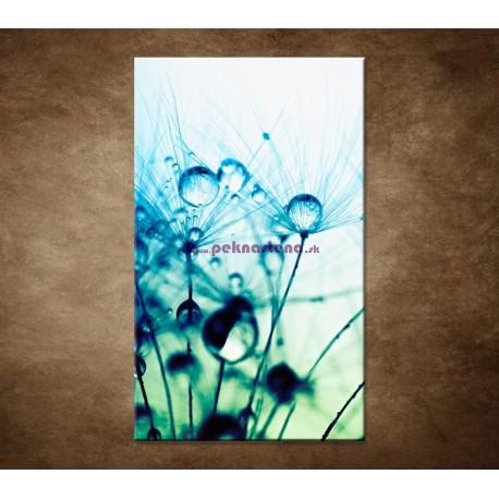 Obrazy na stenu - Kvapky vody na rastline