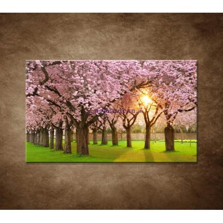 Obrazy na stenu - Kvitnúce čerešne