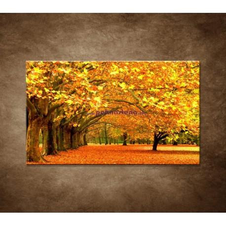 Obrazy na stenu - Park